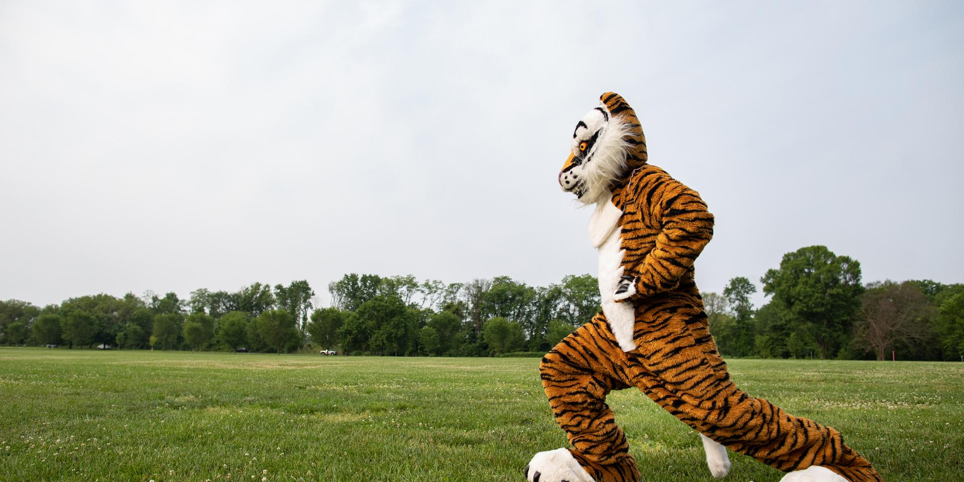 Tiger mascot running across a field